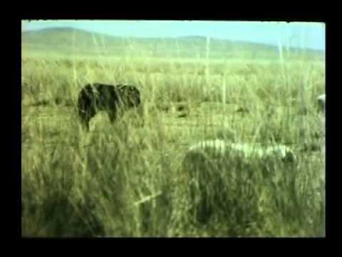 MONGOL BANKHAR documentary film