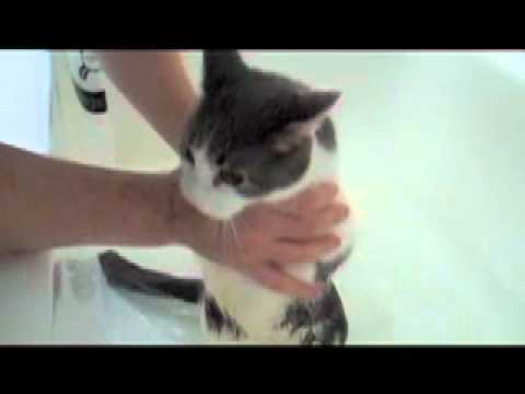 Cat Bath Video Youtube