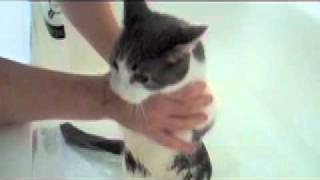 Repeat youtube video Cat Cries Like A Human Baby