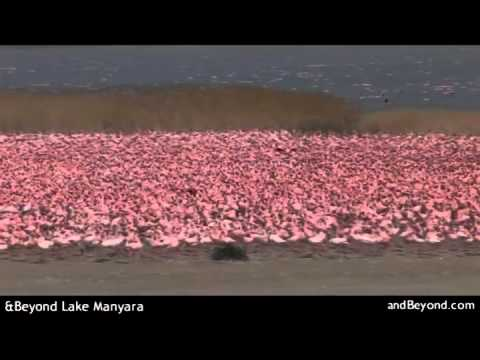 Luxury Lake Manyara National Park   Tanzania