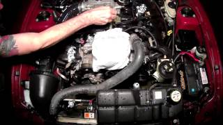 Engine Bay Cleaning 2004 Mustang GT