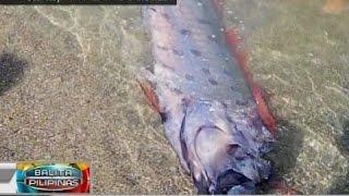 BP: Oarfish, nakitang patay sa baybayin