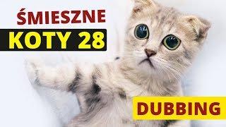 ŚMIESZNE KOTY #28  DUBBING: MATT OLECH