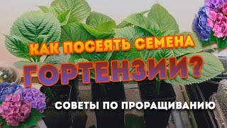 Как посеять семена Гортензии? Особенности выращивания!