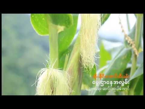 Mindat New Song (ေမြးရပ္ခ်င္းဌာေန) စိုင္းေအာင္ထီးခမ္း