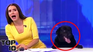Top 10 Live News Reporting Fails(Watching the news is how many keep up with what is happening out there in the world, so it's too bad one cannot always rely on top notch reporting. These are ..., 2016-01-22T14:30:01.000Z)