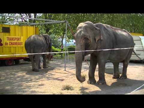 Eléphants Du Zoo Du Cirque Pinder à Epinal Mercredi 26 Juin 2013