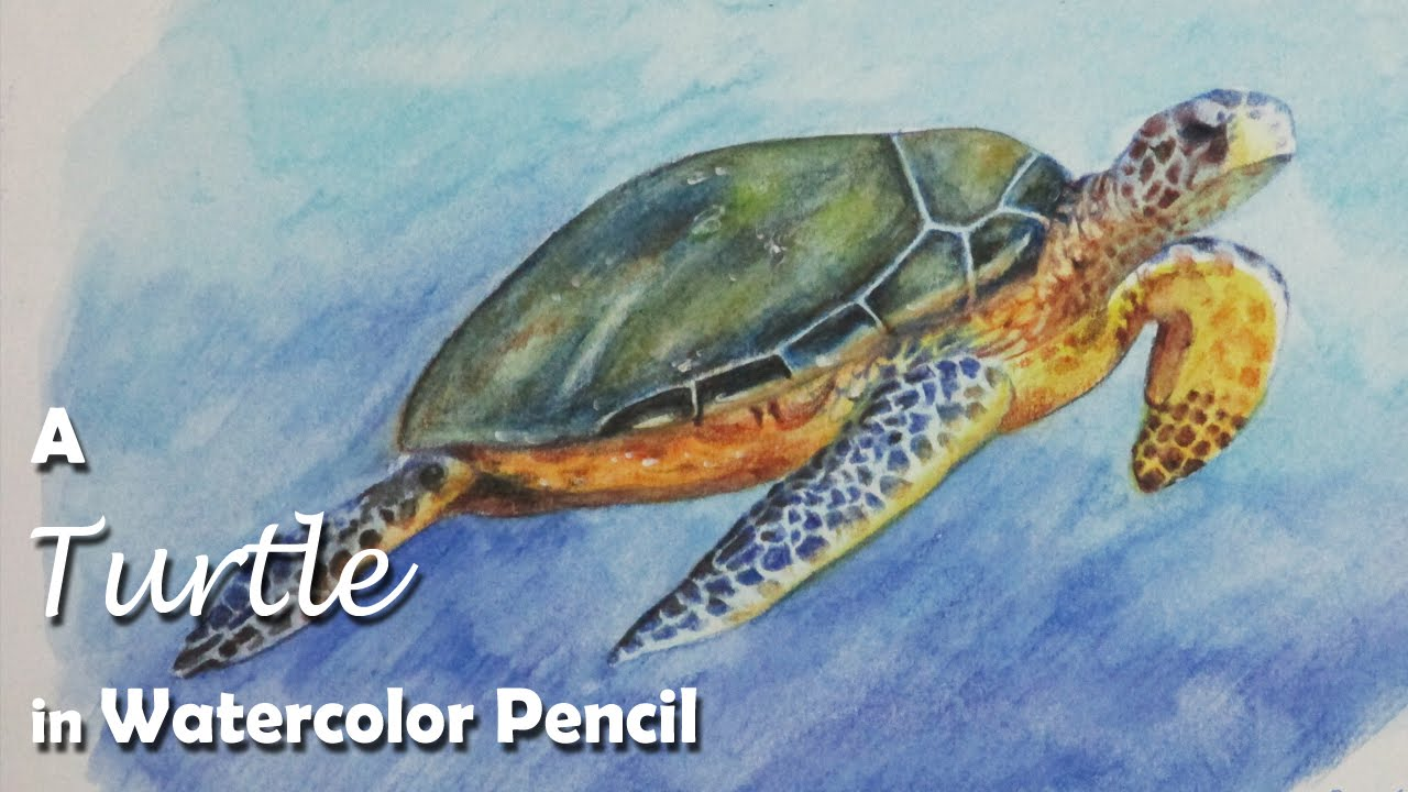 How to Paint A Turtle with Watercolor Pencil  YouTube