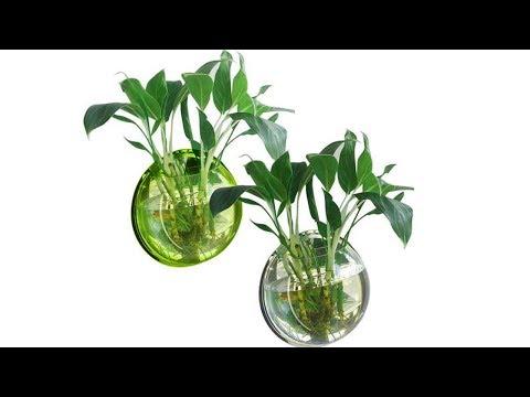 Гидропоника – что это такое? Выращивание комнатных цветов на гидропонике.