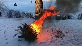 Сжигание елки