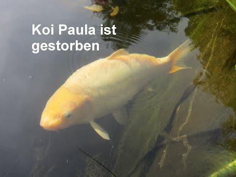 Goldfische laichen im naturteich doovi for Fische im naturteich