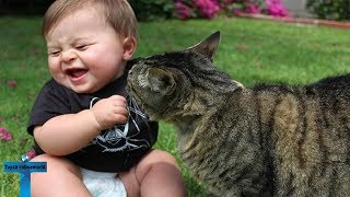 Most Adorable & Cute & Funny Baby Animals Enjoying - Try Not To Laugh Compilation