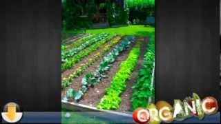 Organic Vegetable Gardening For Beginners