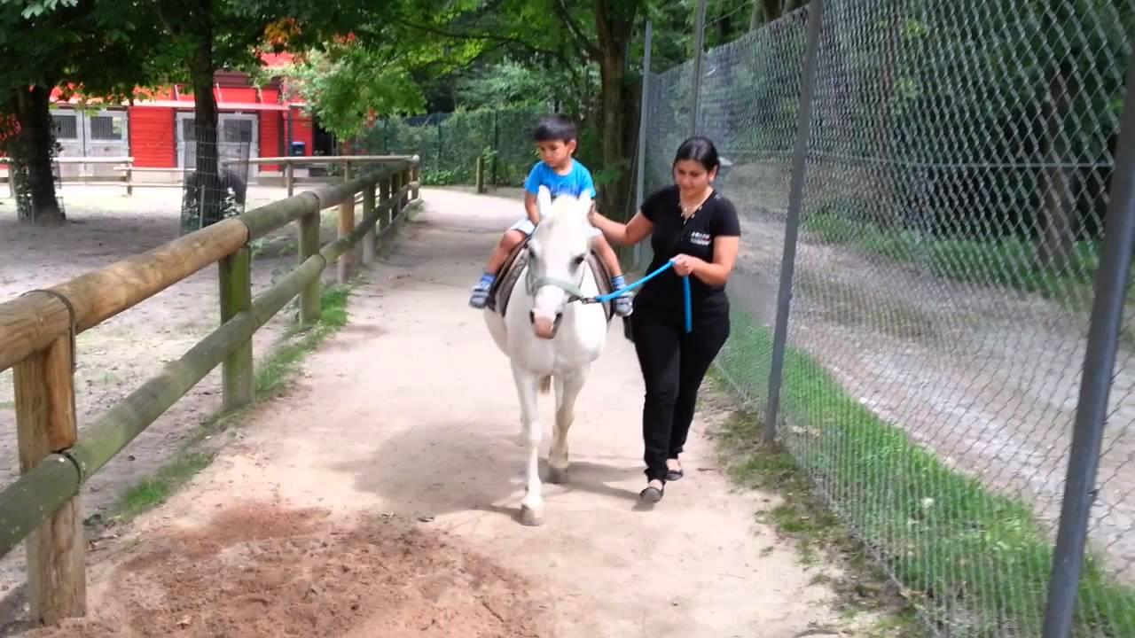 opel zoo frankfurt kaan am pony reiten - youtube