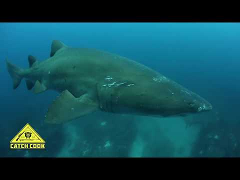 Yellow Tail Spear Fishing [Catch Clean Cook] Arniston, South Africa