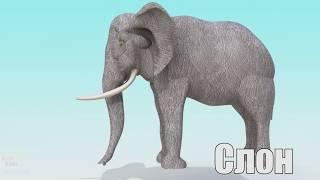 Учим цвета и формы с Дикими Животными Сюрпризами Названия и Звуки Животных для детей