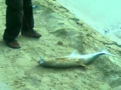 dammam port big fish hunters