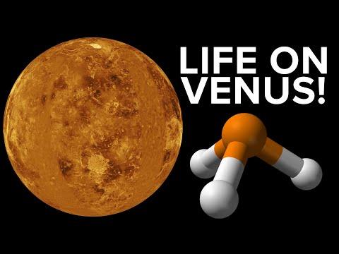 Life (maybe) Found on Venus