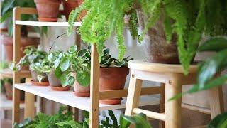 가을 준비에 들어간 우리집 거실정원, 가을맞이 식물관리…