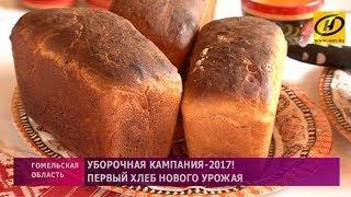 Первый хлеб нового урожая
