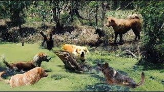 トカゲの恐ろしい力 - 4野生の犬vsトカゲvsライオンvsスネークvsアナコ...