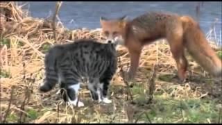 śmieszne koty