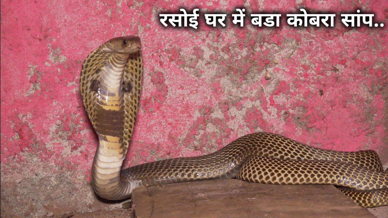 घर मे घुस गया खतरनाक गुस्सैल कोबरा सांप, फिर आप ही देखिए आगे क्या हुआ Rescue cobra snake