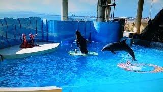 新江ノ島水族館 イルカショー ドルフェリア Enoshima Aquarium Dolphin show