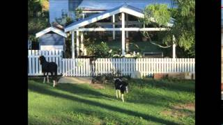 Farm for sale in Queensland