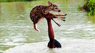 Люди Спасают Жизни Животных   Герои в Реальной Жизни   Спасение Животных