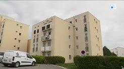 Six chatons tortués à Draguignan