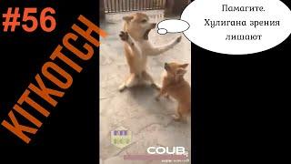 #56 Приколы в соцсетях/ Собаки,  Jokes in Social Networks #56/ Funny animals Dogs