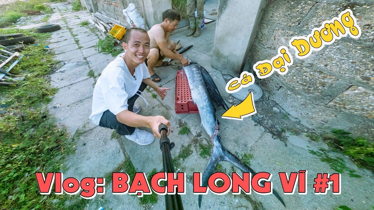 Con cá KHỦNG ở đảo BẠCH LONG VĨ HẢI PHÒNG - Hòn đảo xa nhất VỊNH BẮC BỘ