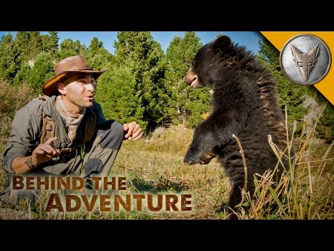 Baby Black Bear - Behind the Adventure