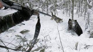 Bear hunting. Охота на медведя с берлоги