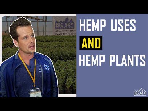 Industrial hemp uses and types of industrial hemp plants