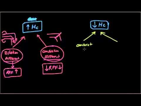 Usmle Step 1 / Renal Physiology 3