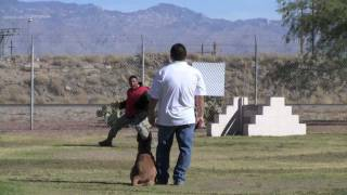 Dog Squad  E-collar Training For Psd K-9's