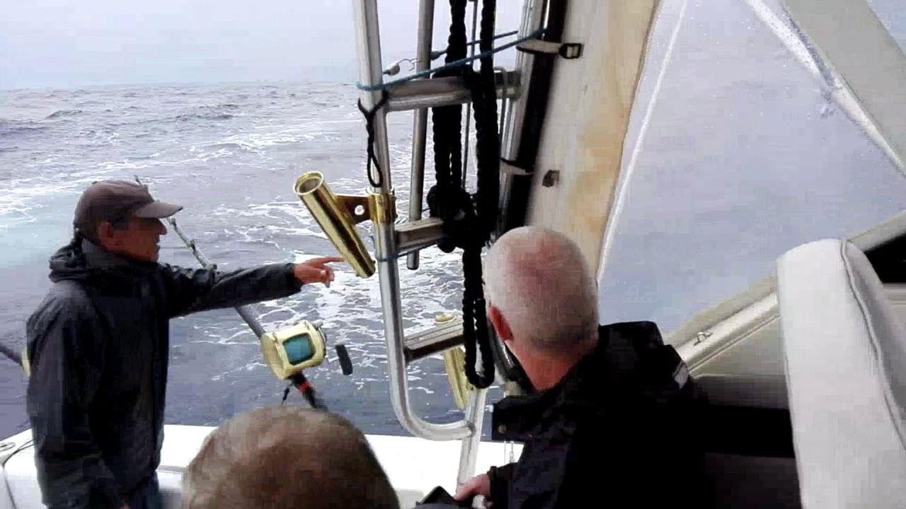 Зацепили кальмара под 2 метра на тунцовую снасть