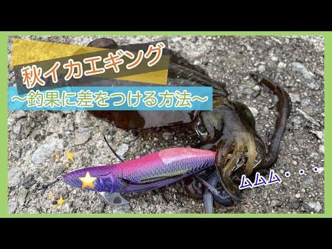 【秋イカエギング(4K)】〜釣果に差をつける方法〜