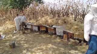 تربية نحل العسل في و لاية تيارت