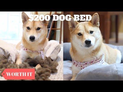 $25 DOG BED VS. $200 DOG BED