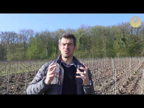 [Reportage] Le Champagne Nicolas Maillart, une maison à part
