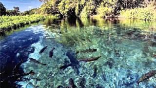 Il pantanal è la più grande zona umida del mondo, un'immensa pianura alluvionale; un'area centrale sudamerica situata per gran parte in brasile (negli ...