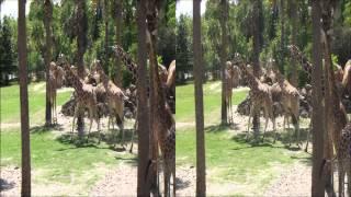 Jacksonville zoo 3D