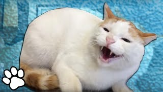 Animals Hate the Vet 😂 | Funny Pet Videos | That Pet Life