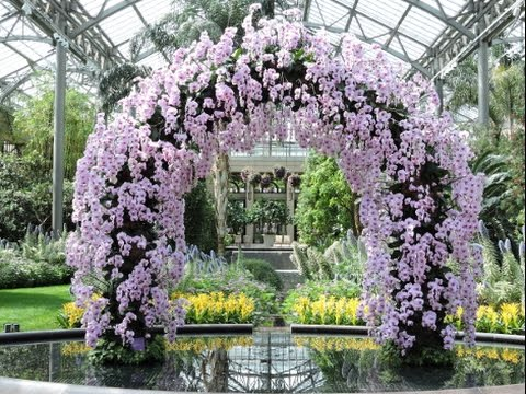 Longwood Gardens Orchid Display 2017