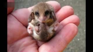 Самые маленькие животные в мире . Smallest animals in the world .