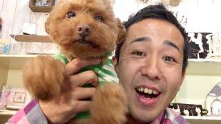番組提供:ペットライン株式会社(http://www.petline.co.jp/) ぬいぐ...