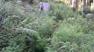 この日は私が撃った鹿を捜索して見事に発見する。